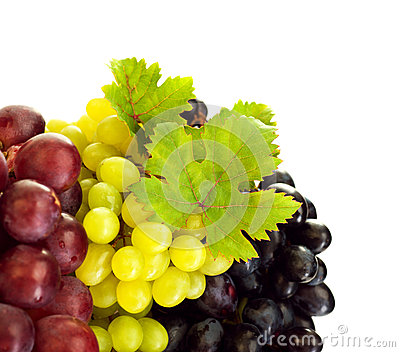 Different kind of grapes