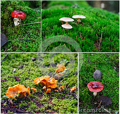 Different mushrooms from Finland