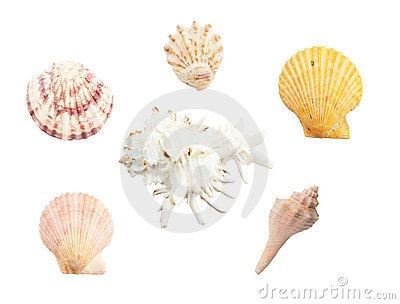 Different seashells on white background