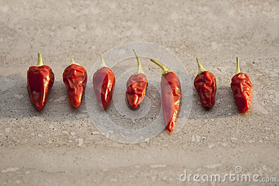 Different sizes of chilli pepper