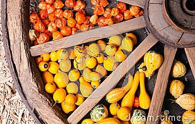 Different sorts of decorative pumpkins