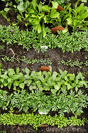 Free Different Vegetable Seedlings With Marking Labels Royalty Free Stock Images - 736249