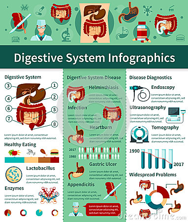 Digestive System Flat Infographics Vector Illustration