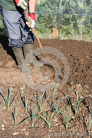 Digging allotment stock photo image 47167722 for Digging ground dream meaning