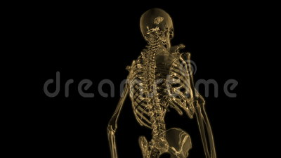 Digital Animation of a human Skeleton Stock Photo