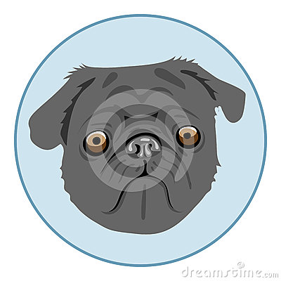 Free Digital Vector Pug Dog Face, In Blue Circle Royalty Free Stock Image - 77664546