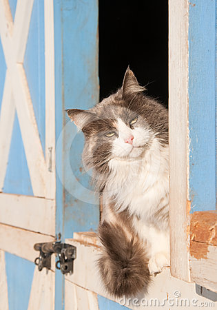 Diluted calico cat sitting on a half door