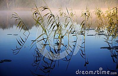 Dimmig morgon för lake ii