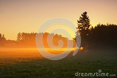 Dimmig morgon på äng. soluppgånglandskap.