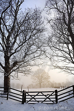 Dimmig morgon - vinter - England
