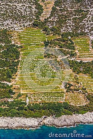 Dingac vineyards on Peljesac peninsula