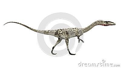 Dinosaur Coelophysis