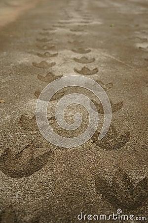 Free Dinosaur Footprint Royalty Free Stock Photography - 39722527