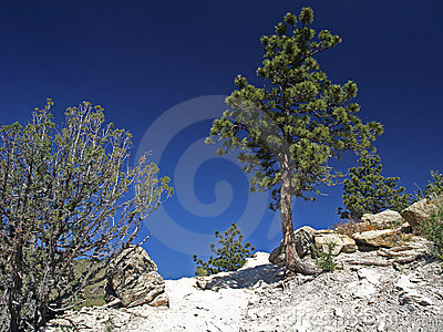 Dinosaur Ridge Colorado