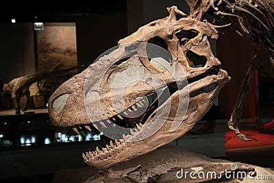 Dinosaur skull Editorial Photo