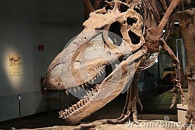 Dinosaur skull Editorial Photography