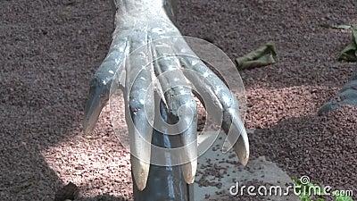Dinosaurio realista del coelophysis en mano del parque uno de Dino con las garras almacen de video