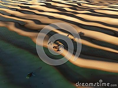 Dinosaurs prowl the desert