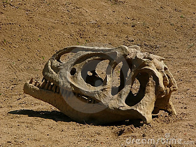 Dinozaur czaszki