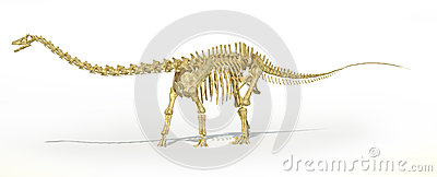 Diplodocus dinosaur full skeleton photo-realistc rendering. Perspective view.