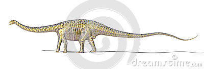 Diplodocus dinosaur photo-realistc rendering, with full skeleton superimposed.