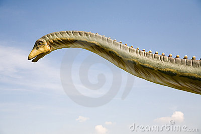 Diplodocus longus neck