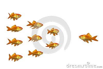Directing goldfish