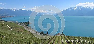 In direction of the Mount Pelerin , Leman Lake