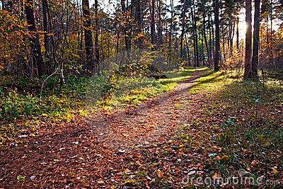 Dirt path in autumn forest