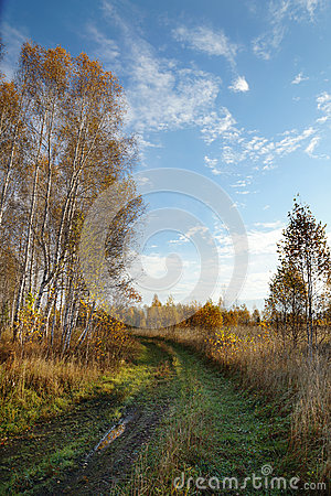 Dirt path in an autumn wood