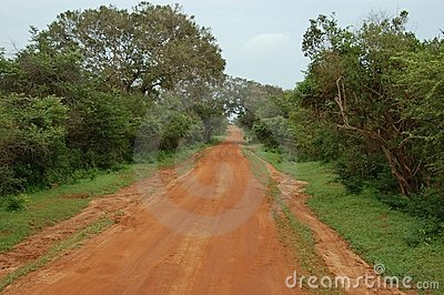 Dirt red road in the savannah