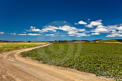 Dirt road in countryside