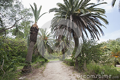 Dirt road between date palm trees, Tunis, Tunisia