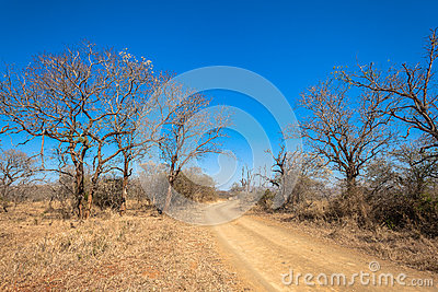 Dirt Road Dry Trees  Terrain