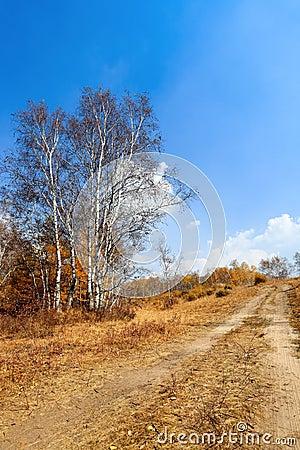 A dirt road in grassland