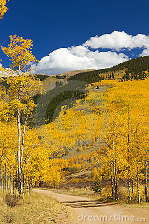 Free Dirt Road Through Colorado Aspen Forest In Fall Stock Photography - 23333882