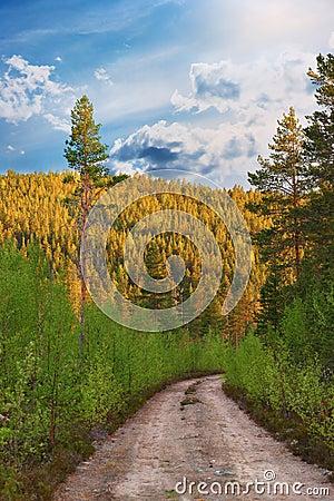 Dirt road in wilderness