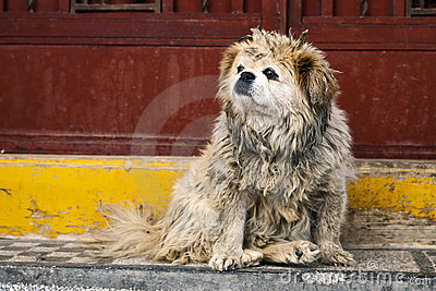 Dirty Dog in China