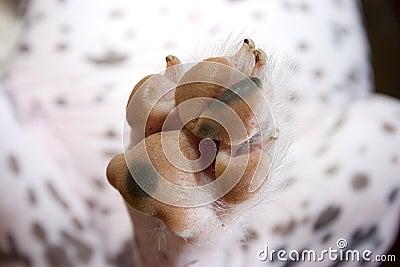 Dirty dog paw