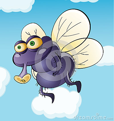 Dirty fly