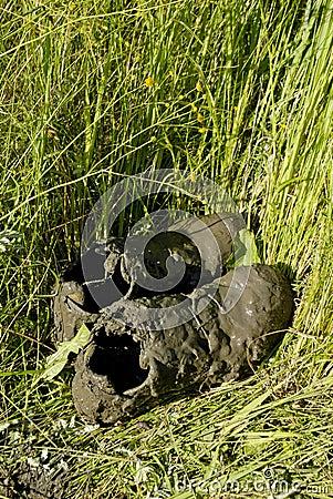File:Raccoon track foot print in mud.jpg - Wikimedia Commons