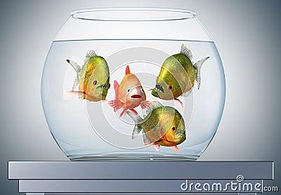 Discourse, goldfish and piranhas