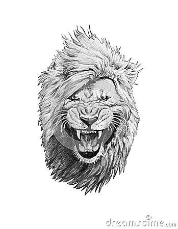 disegno a matita di una testa del leone illustrazione di