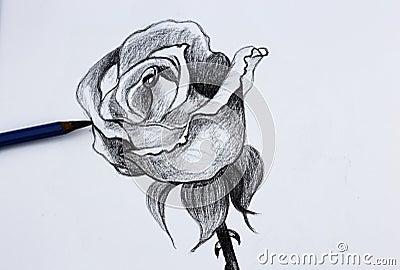 Disegno a matita i dei fiori fotografia stock immagine for Disegni di fiori a matita