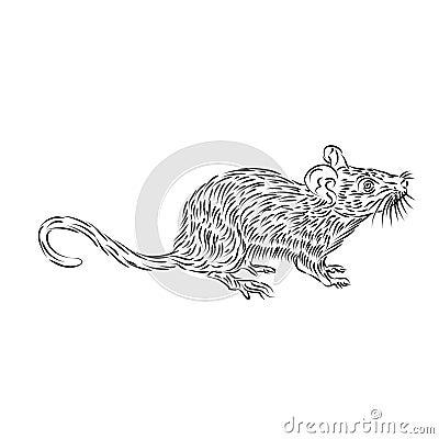 Disegno a tratteggio di un topo domestico illustrazione di for Disegno di piano domestico