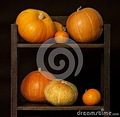 Display of pumpkins on black.