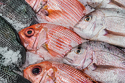 Display Red Snapper and Tilapia