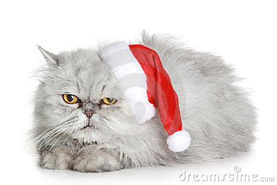 The dissatisfied grey cat in a Christmas hat