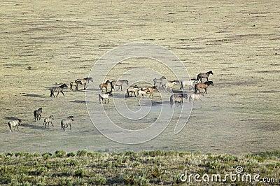 Distant shot of herd of horses