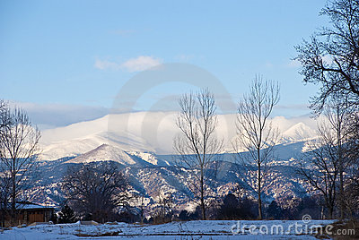 Distant Snowy Mountains with Foreground Trees